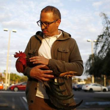 Ybor Resident Protects City's Beloved Chickens