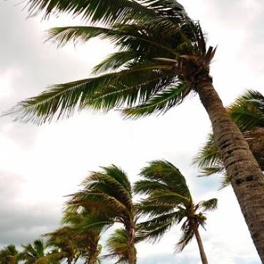 SBA Offers Economic Injury Disaster Loans to Small Businesses  In Florida Affected by Hurricane Irma