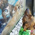 dog looking at mural of dogs