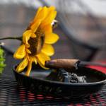 cigar in ashtray next to sunflower