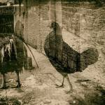 double exposure of chicken and brick building