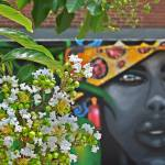 flowers of a tree in front of a mural.