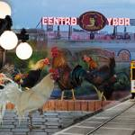 collage of roosters, streetcar, and centro ybor sign